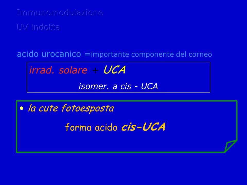 irrad. solare + UCA la cute fotoesposta forma acido cis-UCA
