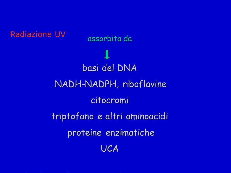 triptofano e altri aminoacidi proteine enzimatiche UCA