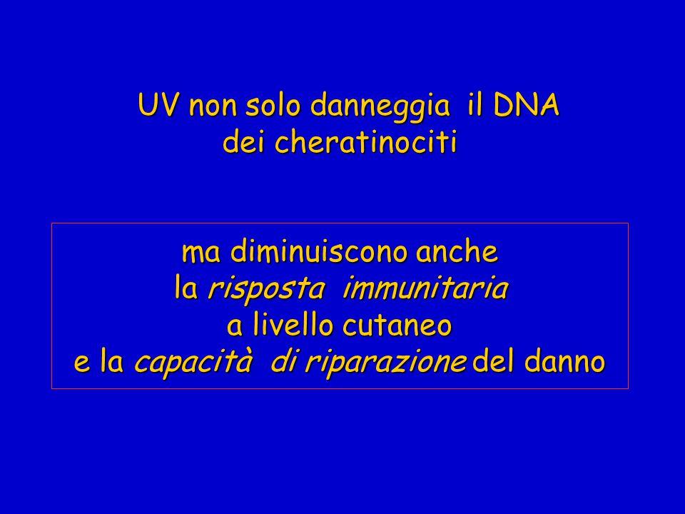 UV non solo danneggia il DNA dei cheratinociti ma diminuiscono anche la risposta immunitaria a livello cutaneo e la capacità di riparazione del danno