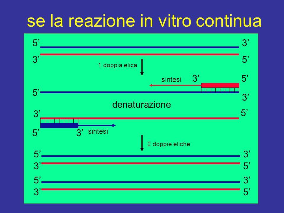 se la reazione in vitro continua