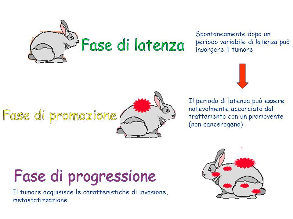 Fase di latenza Fase di promozione Fase di progressione
