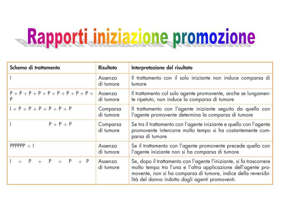 Rapporti iniziazione promozione