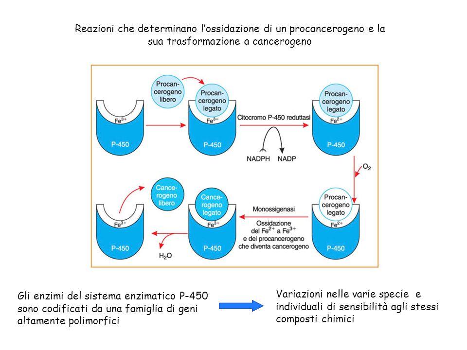 Reazioni che determinano l'ossidazione di un procancerogeno e la sua trasformazione a cancerogeno