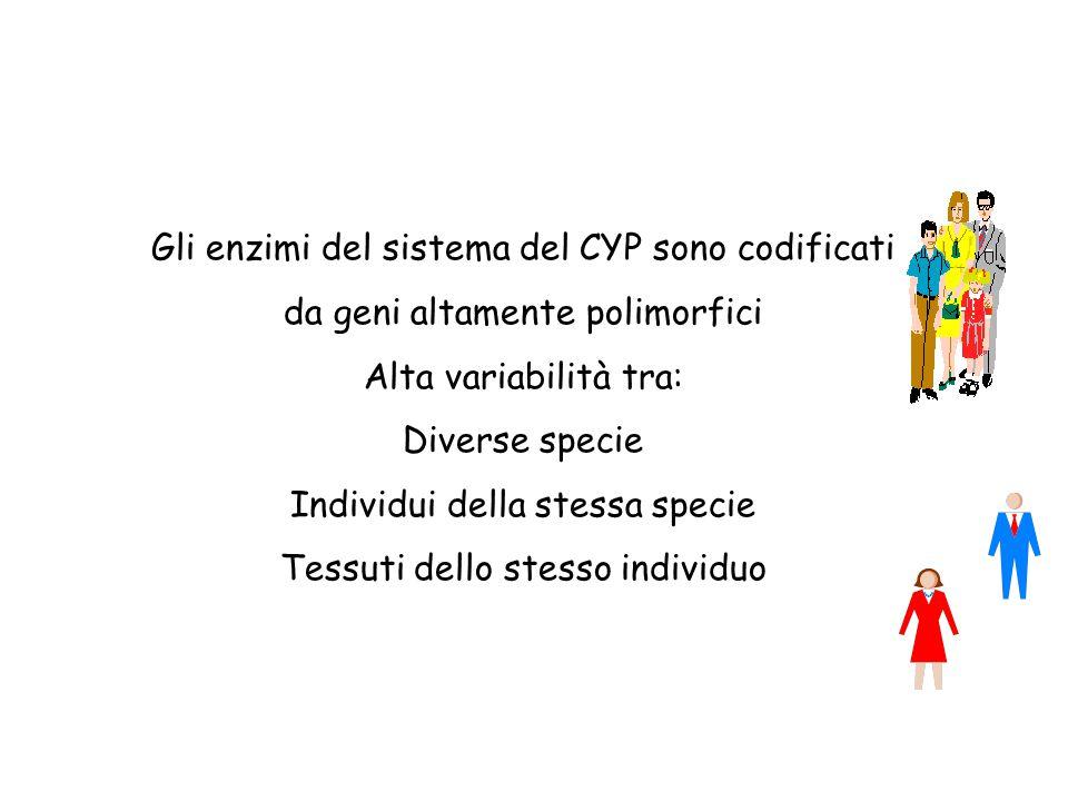 Gli enzimi del sistema del CYP sono codificati