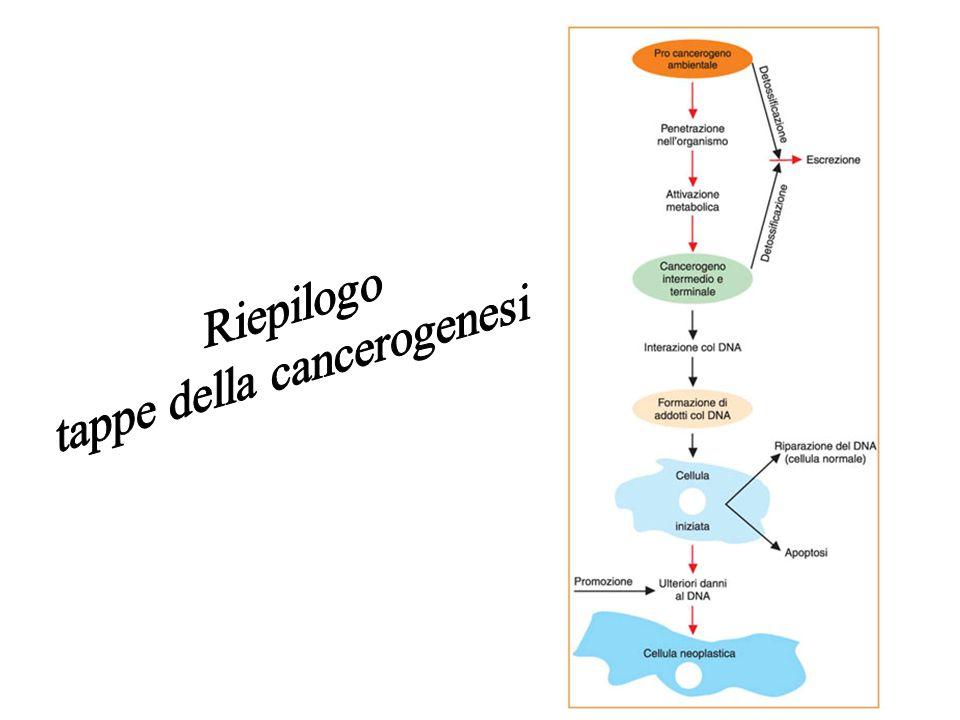 tappe della cancerogenesi
