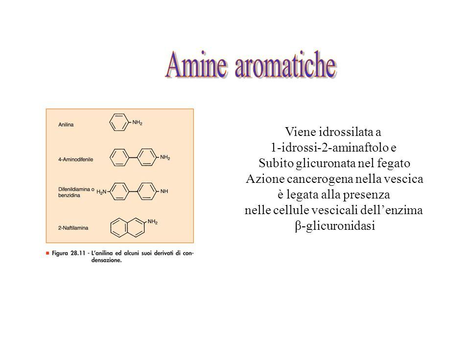 Amine aromatiche Viene idrossilata a 1-idrossi-2-aminaftolo e