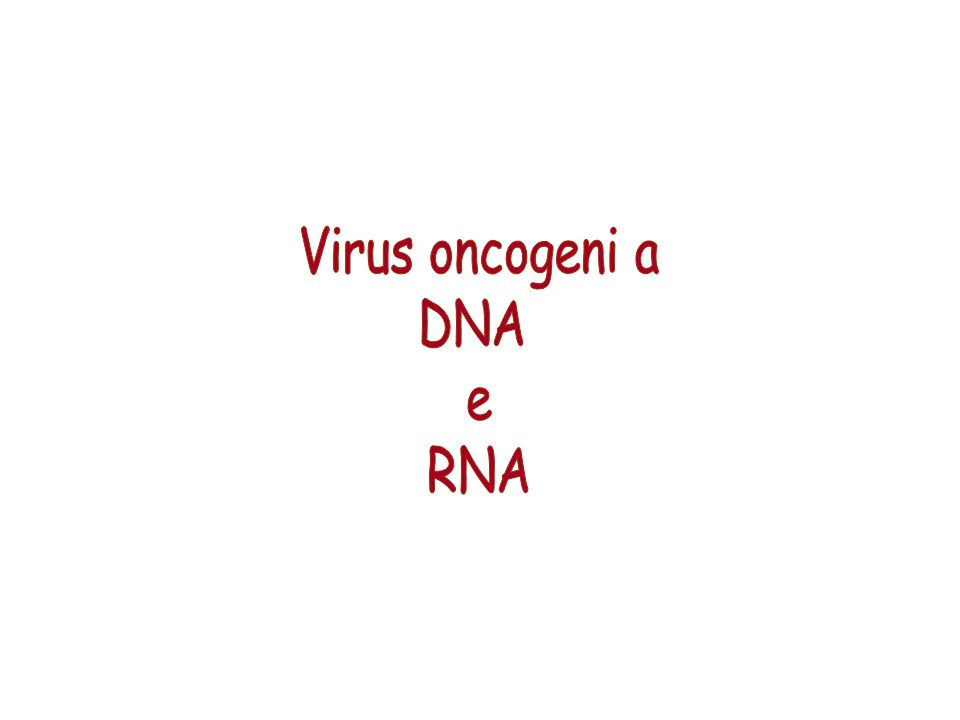 Virus oncogeni a DNA e RNA