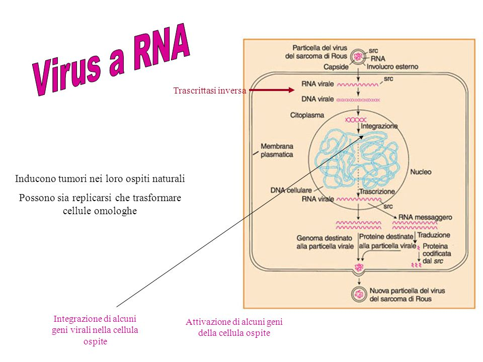 Virus a RNA Inducono tumori nei loro ospiti naturali