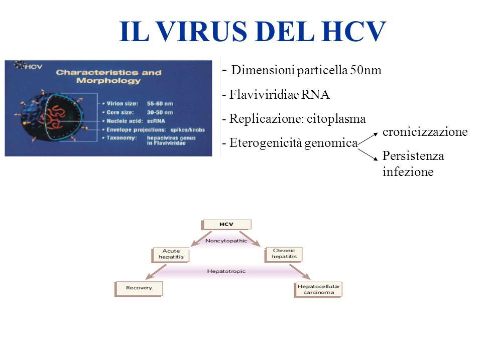 IL VIRUS DEL HCV - Dimensioni particella 50nm - Flaviviridiae RNA