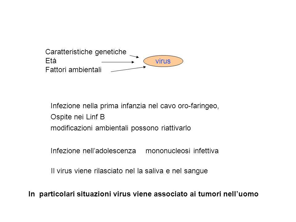 Caratteristiche genetiche