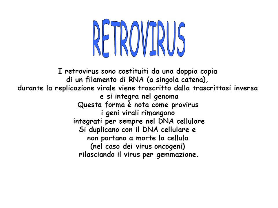 RETROVIRUS I retrovirus sono costituiti da una doppia copia