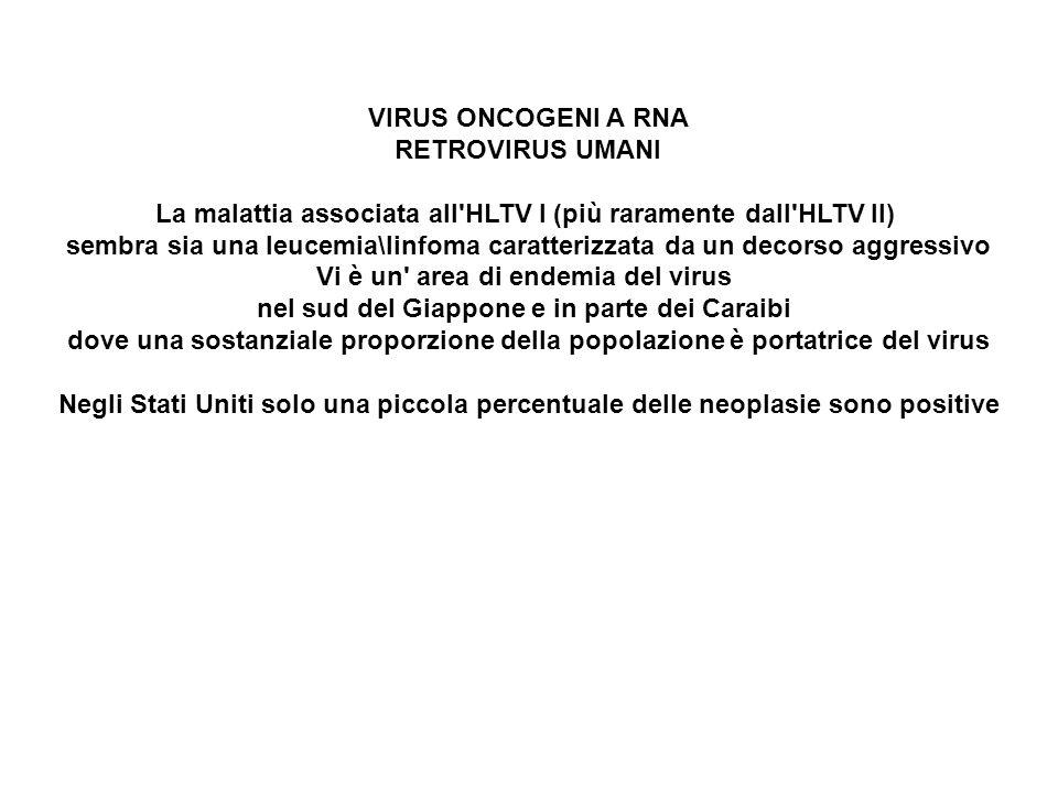 La malattia associata all HLTV I (più raramente dall HLTV II)