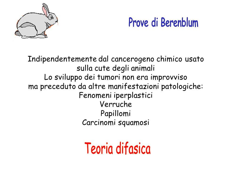 Teoria difasica Prove di Berenblum