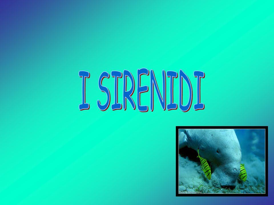 I SIRENIDI