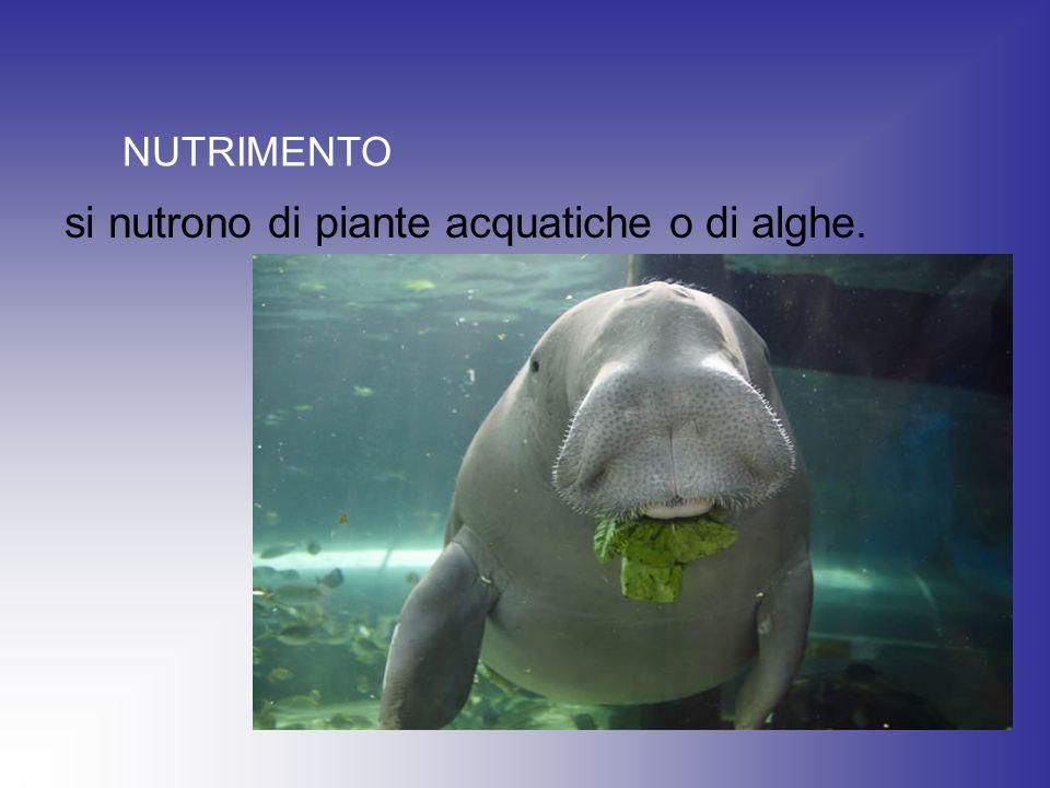 si nutrono di piante acquatiche o di alghe.
