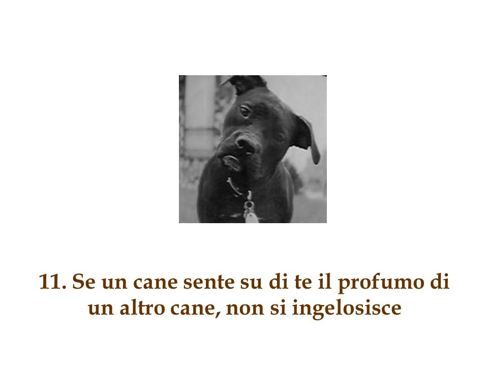 11. Se un cane sente su di te il profumo di un altro cane, non si ingelosisce