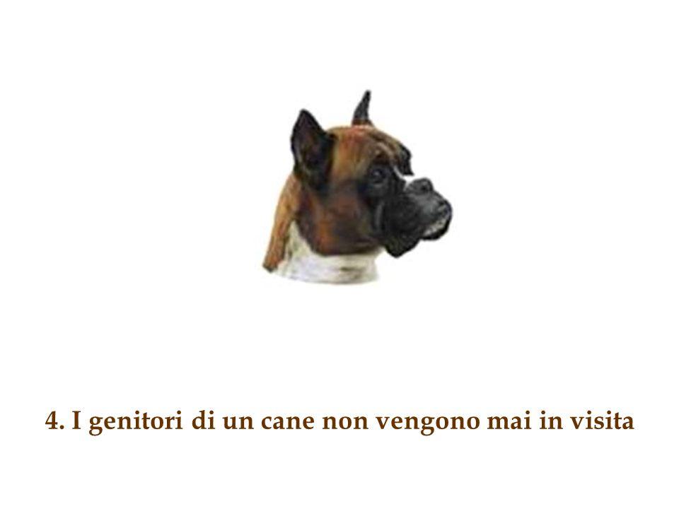4. I genitori di un cane non vengono mai in visita
