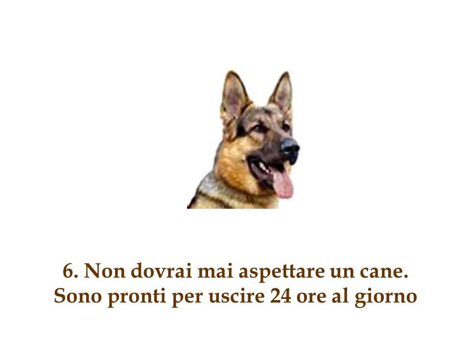 6. Non dovrai mai aspettare un cane