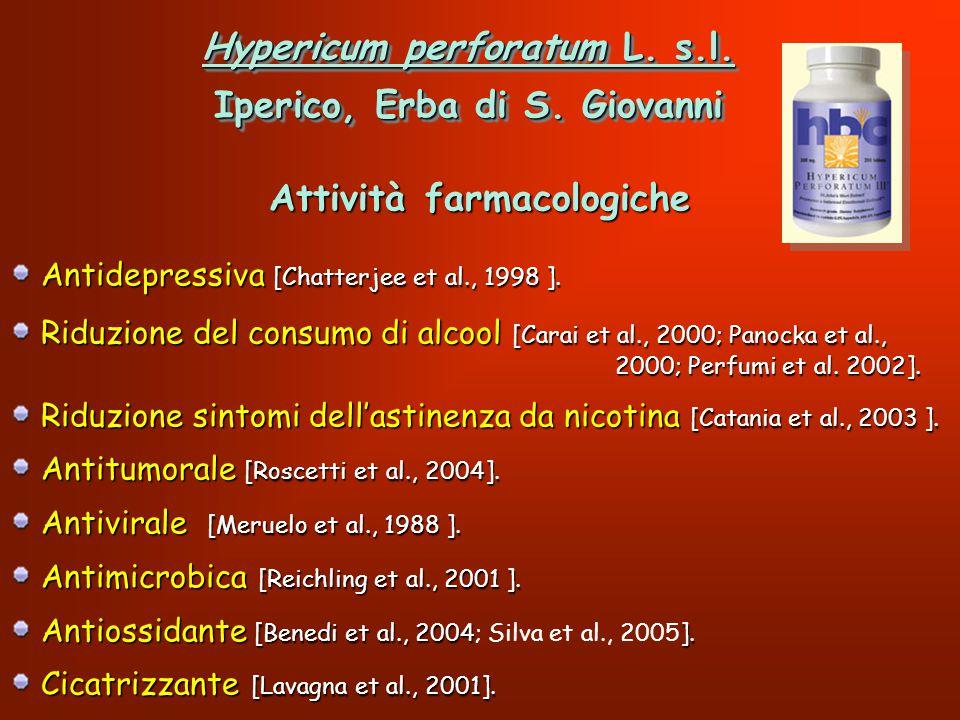 Hypericum perforatum L. s.l. Iperico, Erba di S. Giovanni