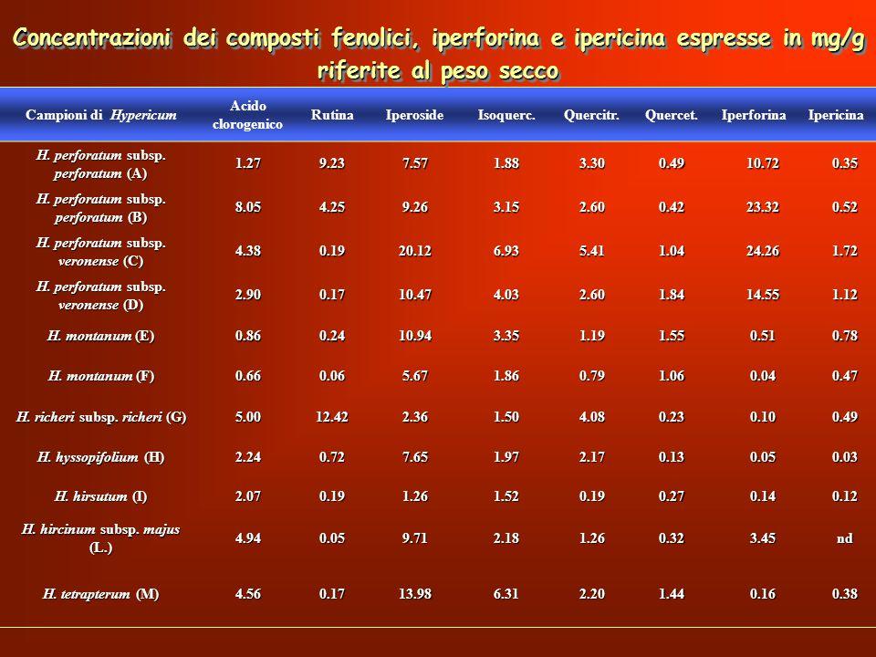 Concentrazioni dei composti fenolici, iperforina e ipericina espresse in mg/g