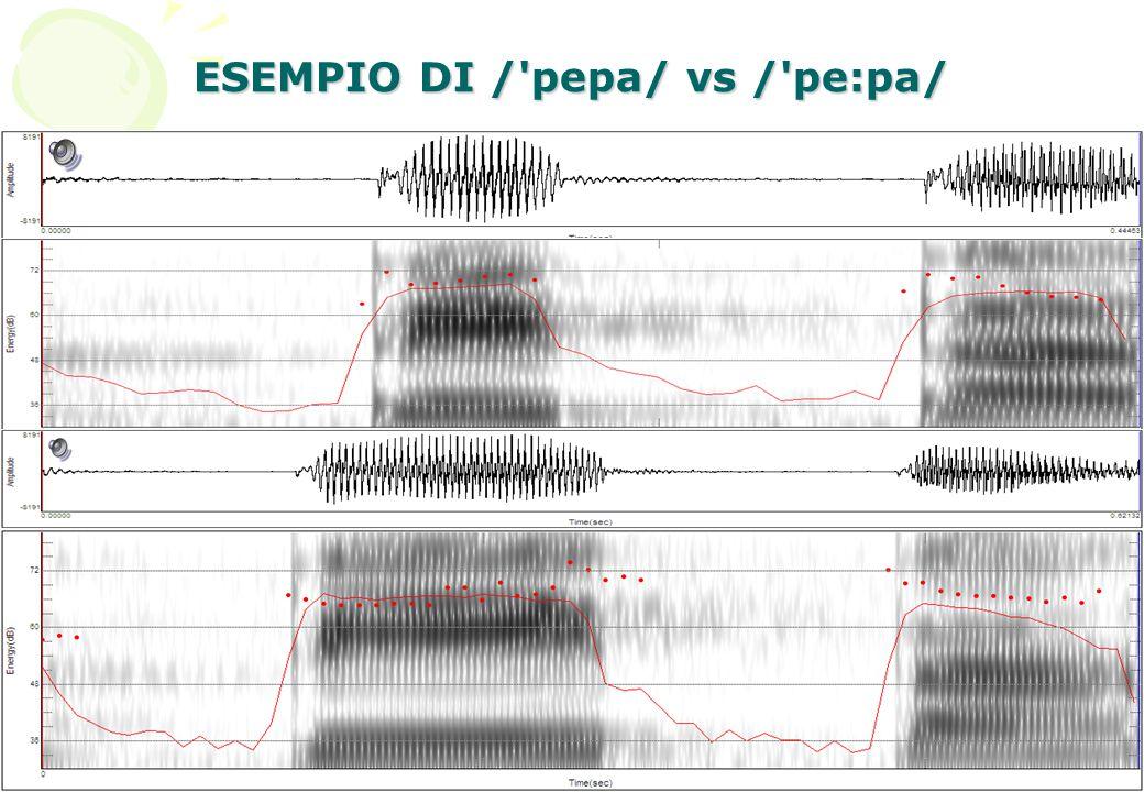 ESEMPIO DI / pepa/ vs / pe:pa/