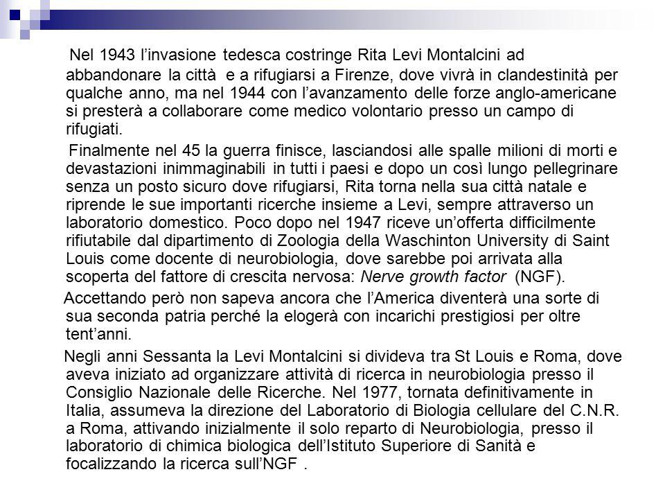 Nel 1943 l'invasione tedesca costringe Rita Levi Montalcini ad abbandonare la città e a rifugiarsi a Firenze, dove vivrà in clandestinità per qualche anno, ma nel 1944 con l'avanzamento delle forze anglo-americane si presterà a collaborare come medico volontario presso un campo di rifugiati.