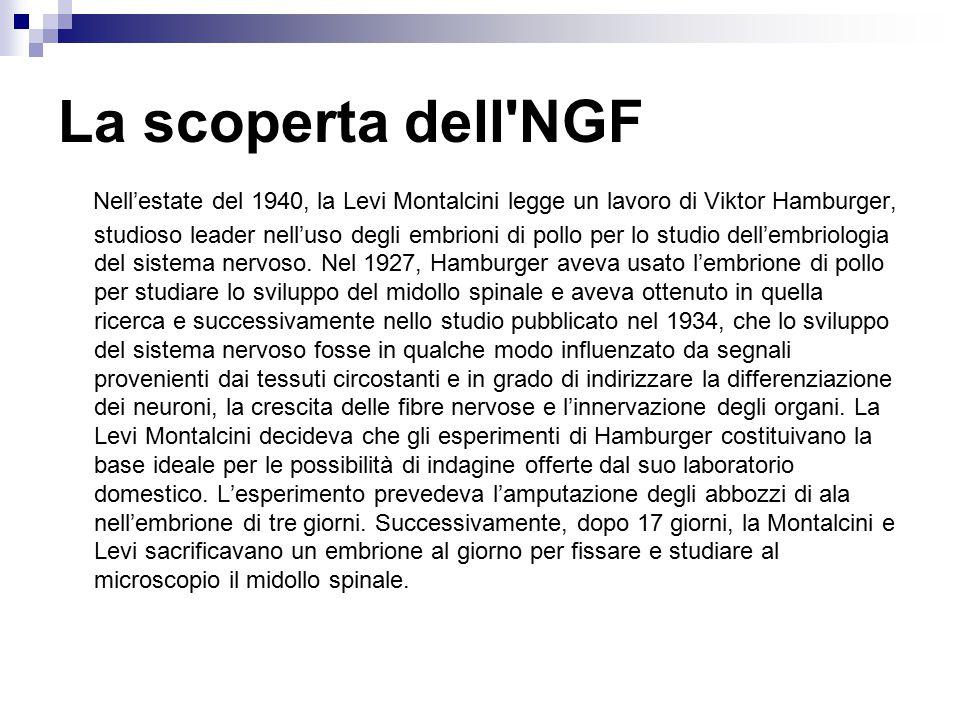 La scoperta dell NGF