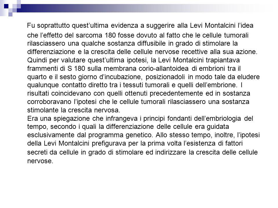 Fu soprattutto quest'ultima evidenza a suggerire alla Levi Montalcini l'idea che l'effetto del sarcoma 180 fosse dovuto al fatto che le cellule tumorali rilasciassero una qualche sostanza diffusibile in grado di stimolare la differenziazione e la crescita delle cellule nervose recettive alla sua azione.