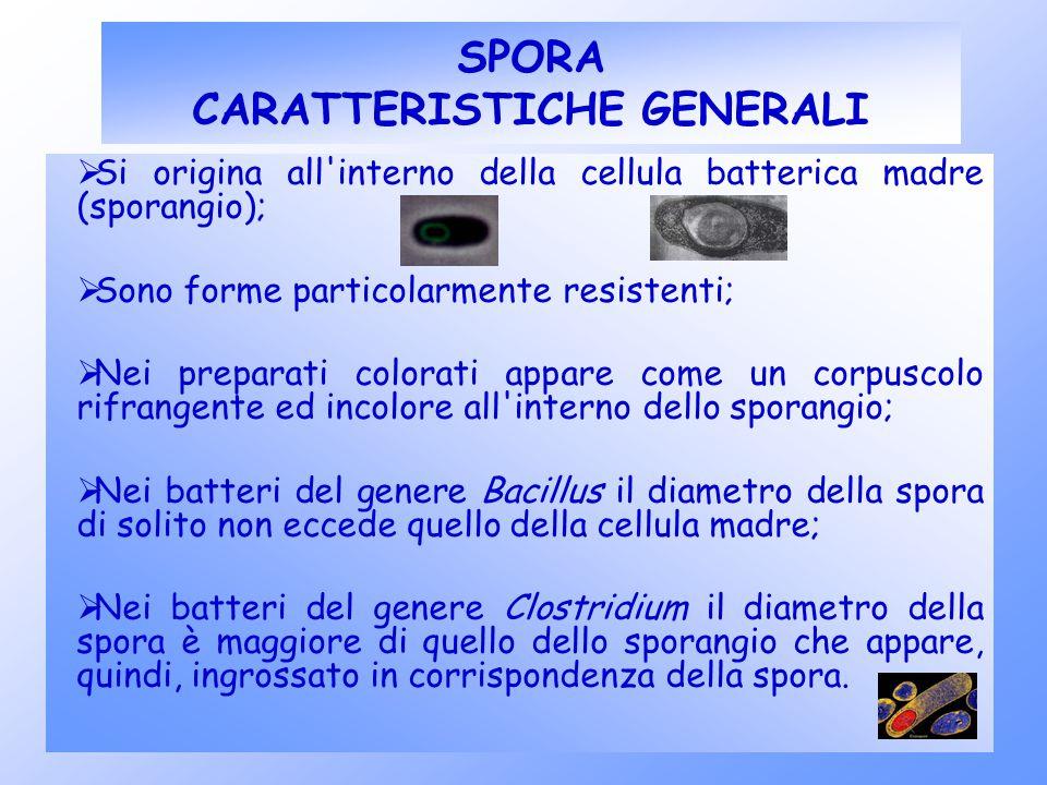 SPORA CARATTERISTICHE GENERALI