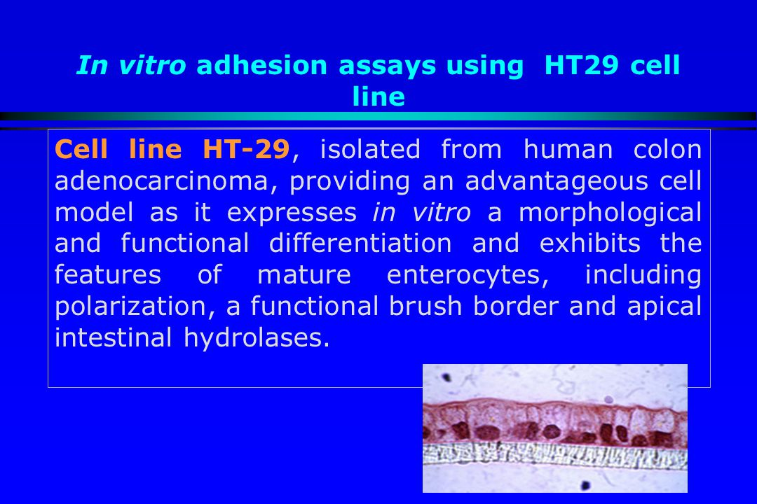 In vitro adhesion assays using HT29 cell line