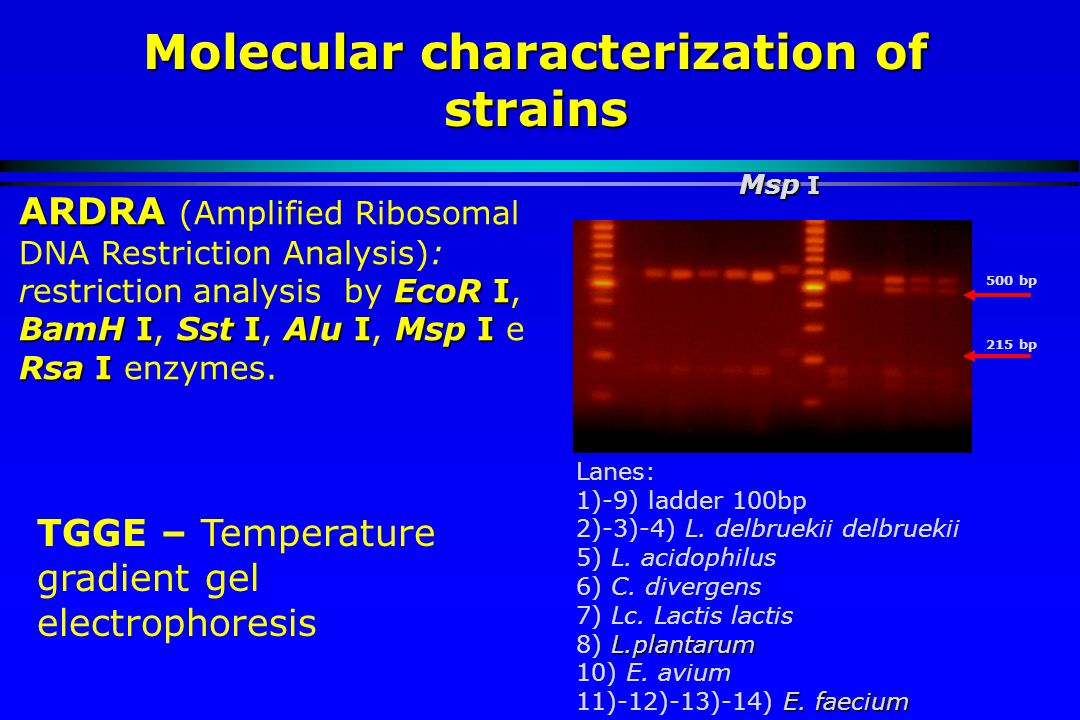 Molecular characterization of strains