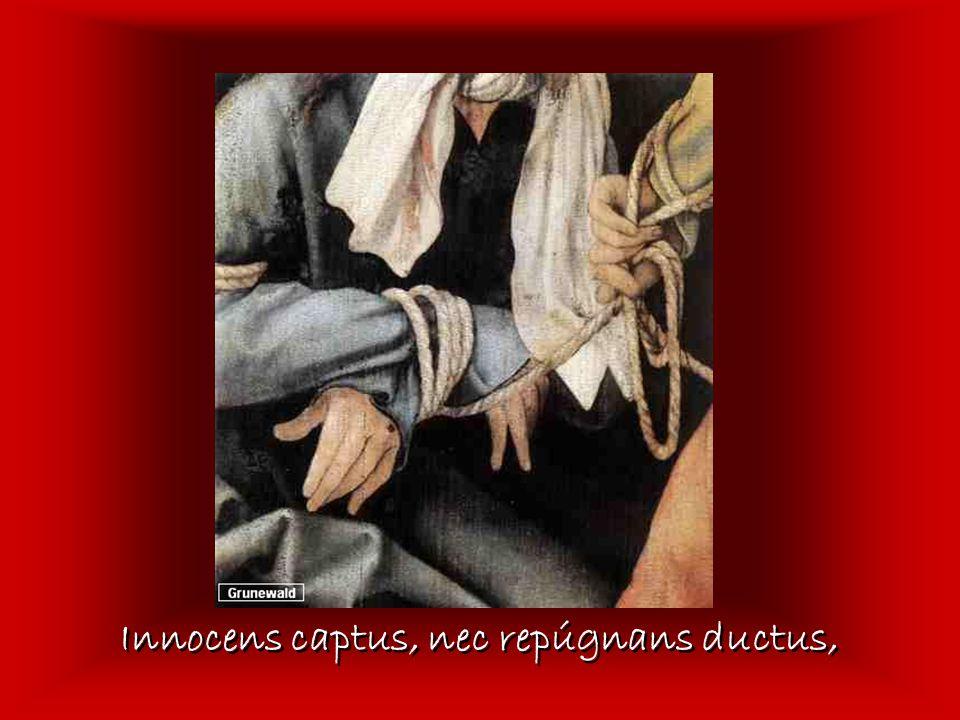 Innocens captus, nec repúgnans ductus,