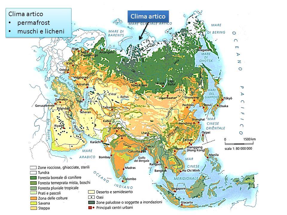 Clima artico permafrost muschi e licheni Clima artico