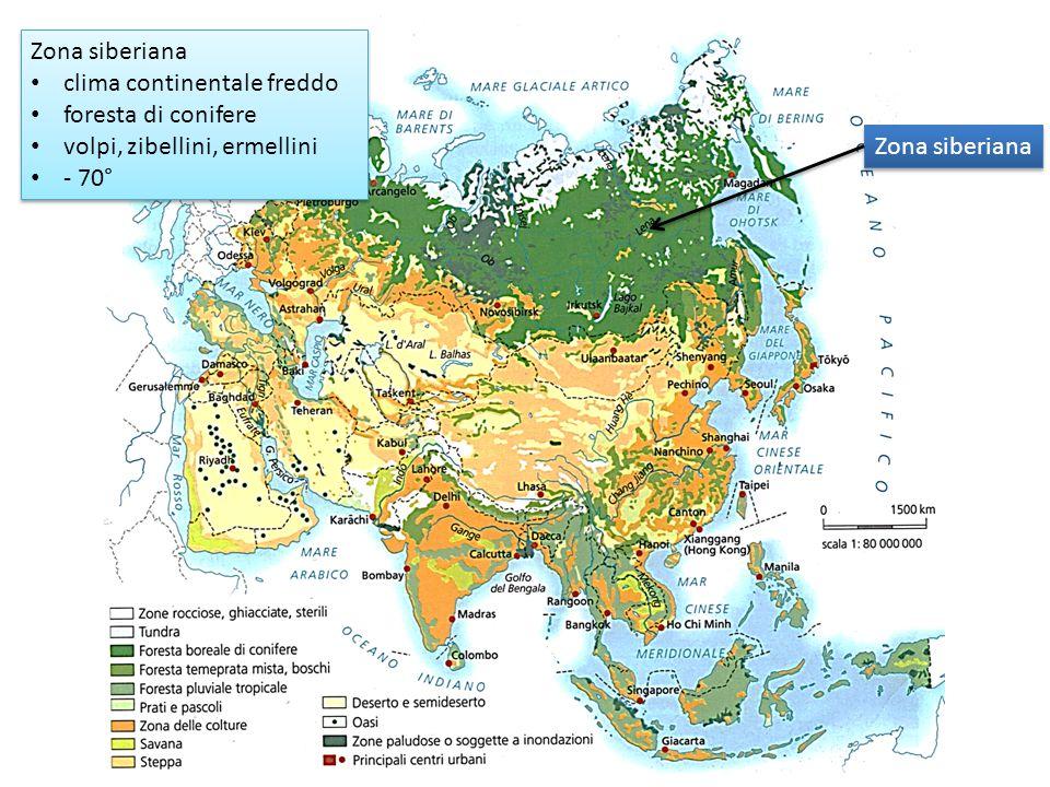 Zona siberiana clima continentale freddo. foresta di conifere. volpi, zibellini, ermellini. - 70°
