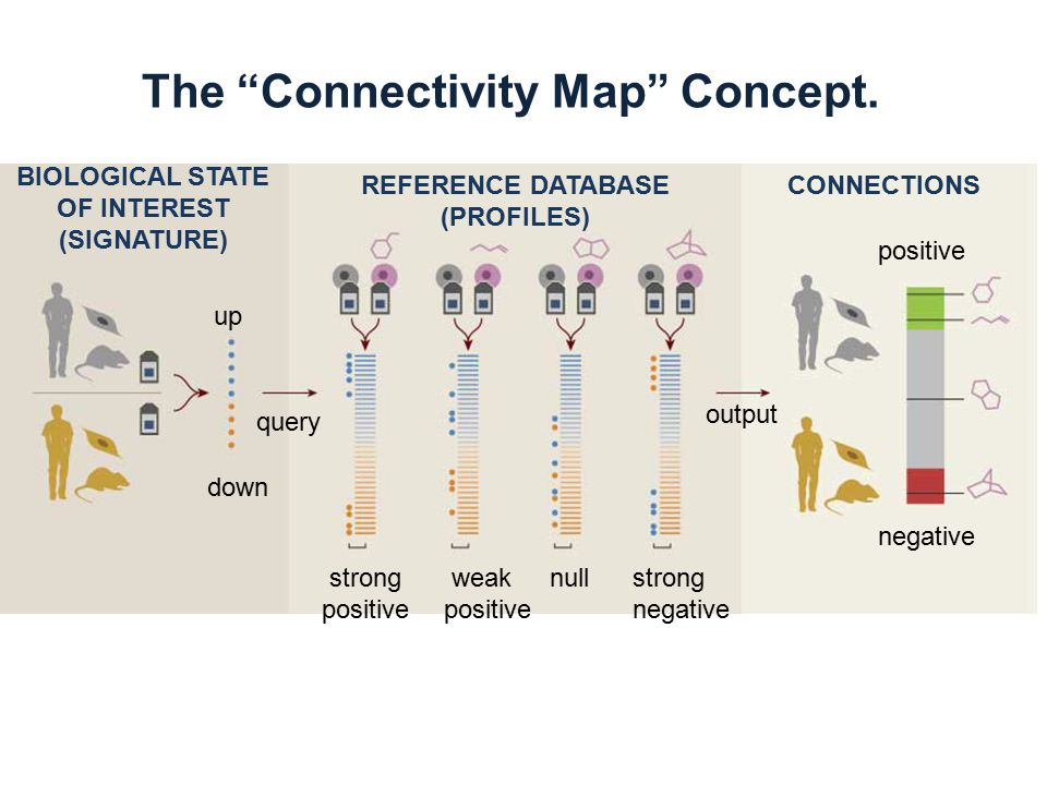 The Connectivity Map Concept.