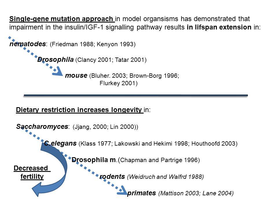 nematodes: (Friedman 1988; Kenyon 1993)