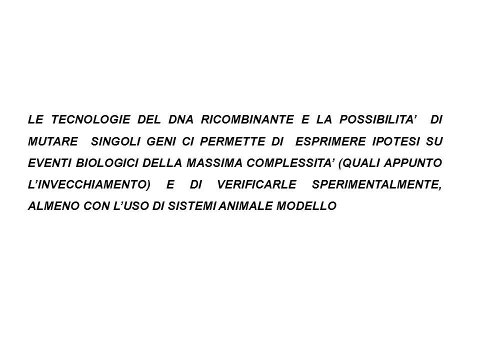 LE TECNOLOGIE DEL DNA RICOMBINANTE E LA POSSIBILITA' DI MUTARE SINGOLI GENI CI PERMETTE DI ESPRIMERE IPOTESI SU EVENTI BIOLOGICI DELLA MASSIMA COMPLESSITA' (QUALI APPUNTO L'INVECCHIAMENTO) E DI VERIFICARLE SPERIMENTALMENTE, ALMENO CON L'USO DI SISTEMI ANIMALE MODELLO