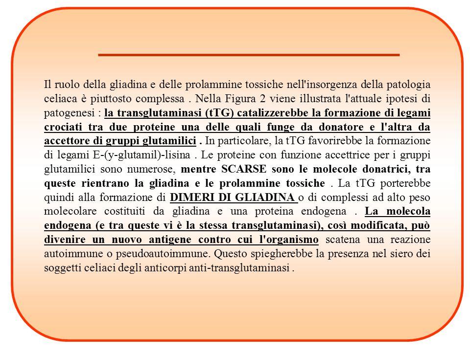 Il ruolo della gliadina e delle prolammine tossiche nell insorgenza della patologia celiaca è piuttosto complessa .