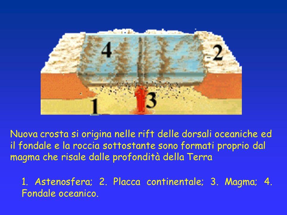 Nuova crosta si origina nelle rift delle dorsali oceaniche ed il fondale e la roccia sottostante sono formati proprio dal magma che risale dalle profondità della Terra