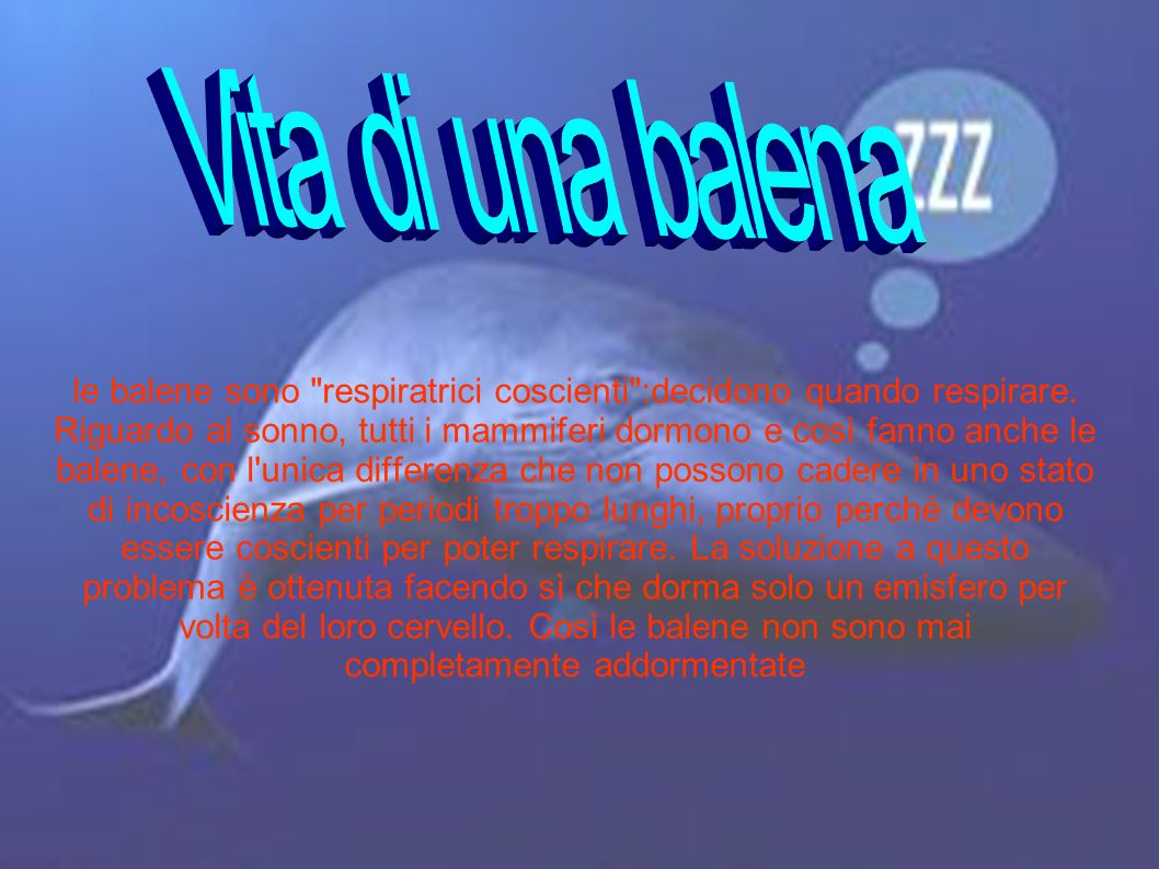 Vita di una balena