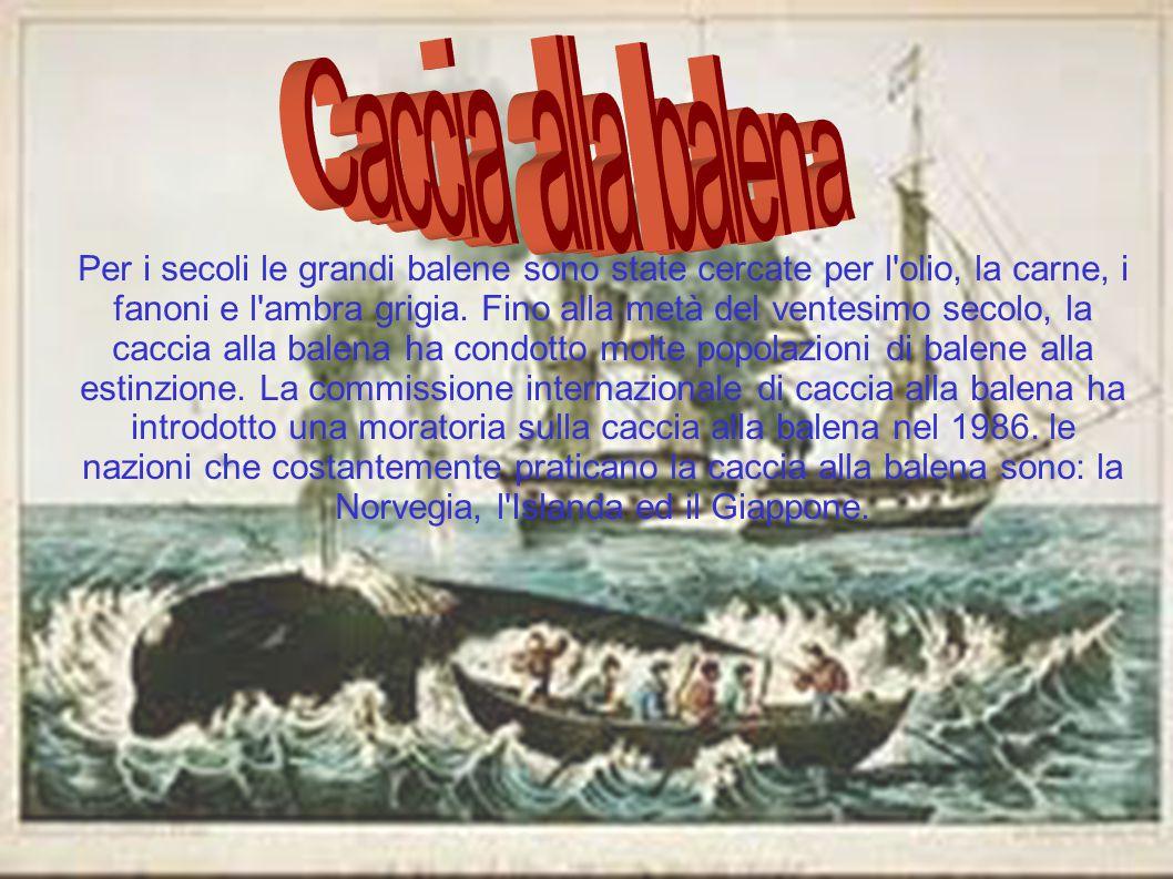 Caccia alla balena