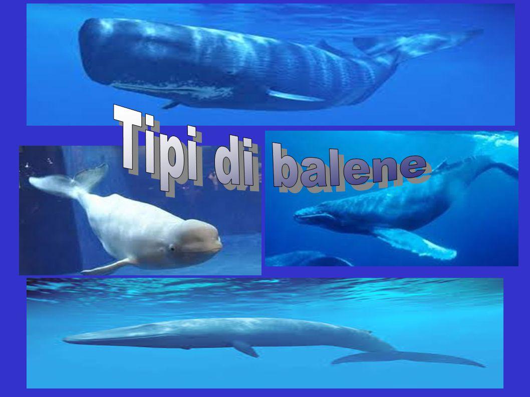Tipi di balene