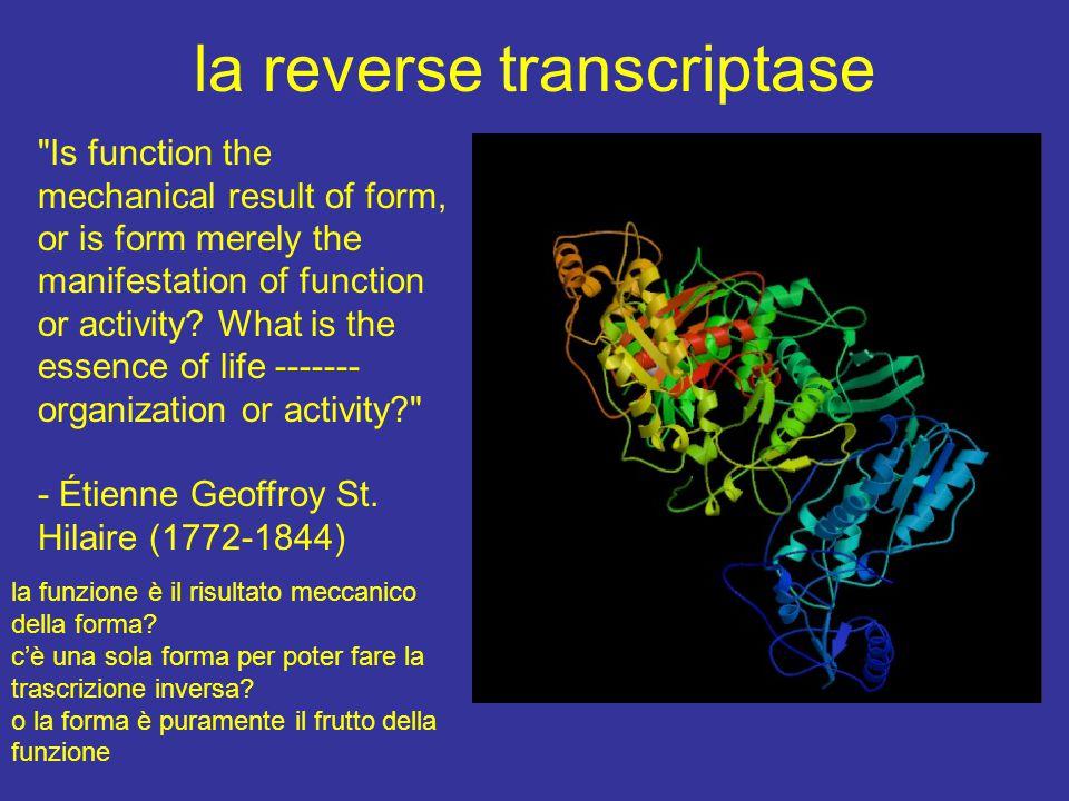 la reverse transcriptase