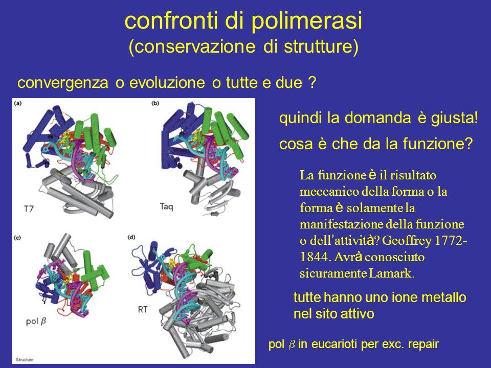 confronti di polimerasi (conservazione di strutture)