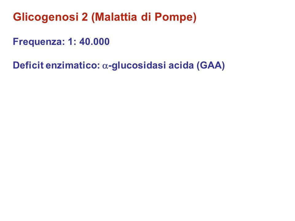 Glicogenosi 2 (Malattia di Pompe)