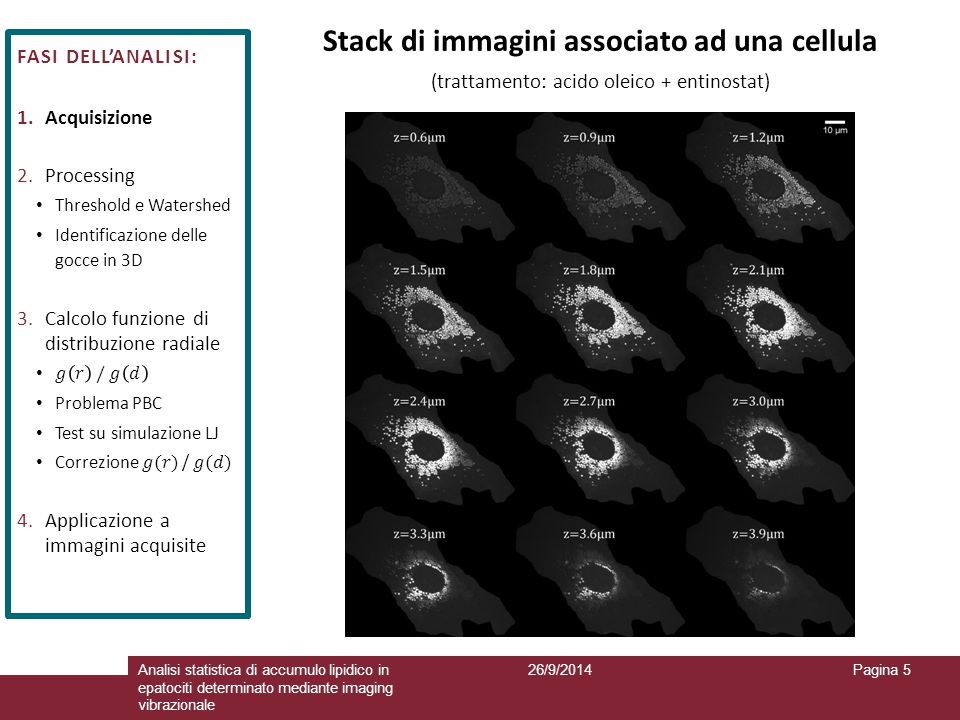 Stack di immagini associato ad una cellula