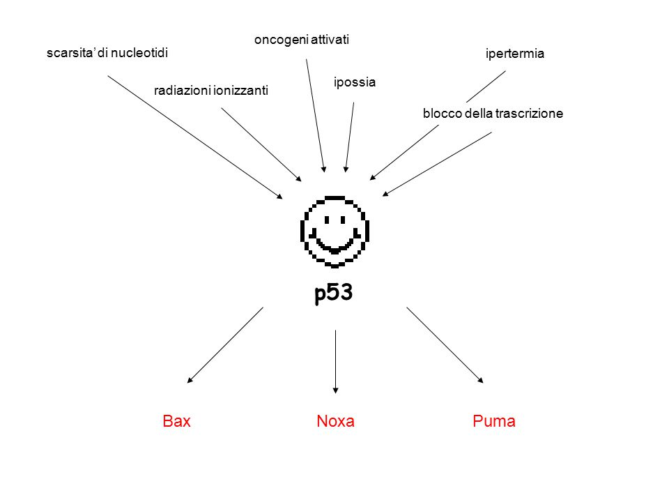 p53 Bax Puma Noxa oncogeni attivati scarsita' di nucleotidi ipertermia