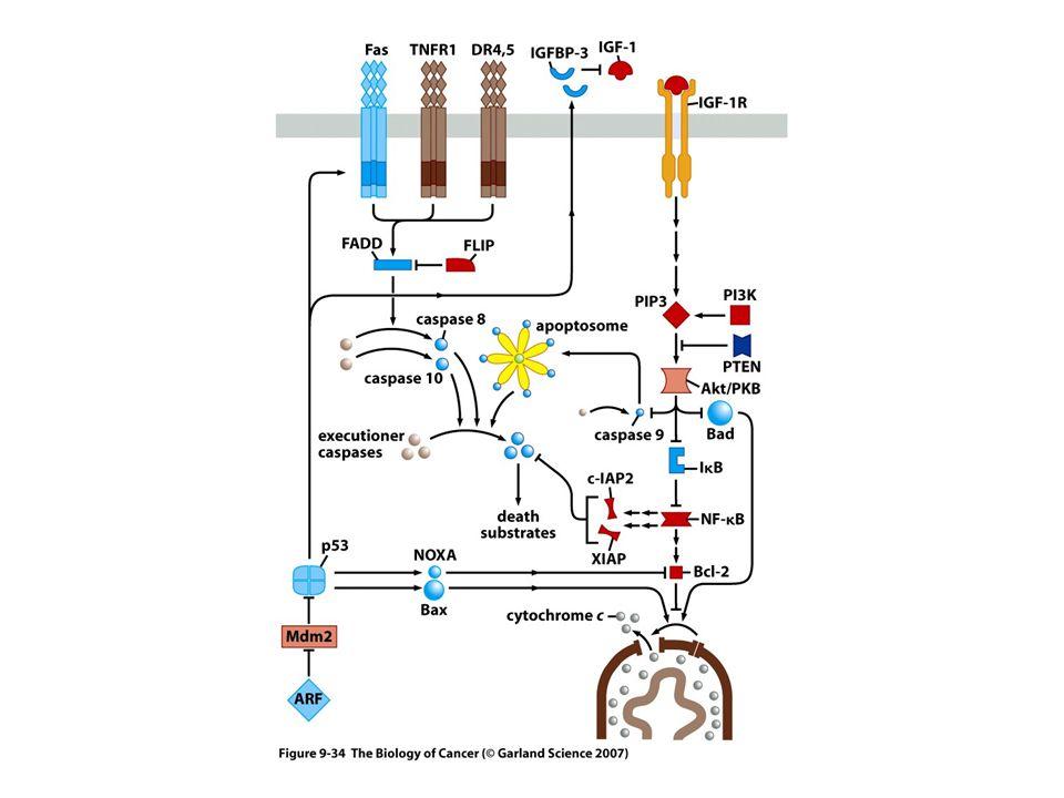L attivita delle proteine indicate in blu puo essere diminuita in alcuni tumori, mentre quella delle proteine colorate in rosso puo essere aumentata