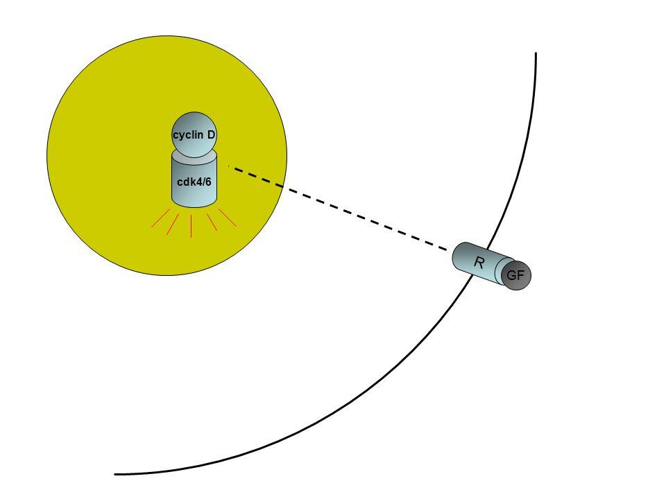 cyclin D cdk4/6 Il sistema ciclina D/cdk4 (o cdk6) e' un iniziatore chiave del ciclo cellulare R GF