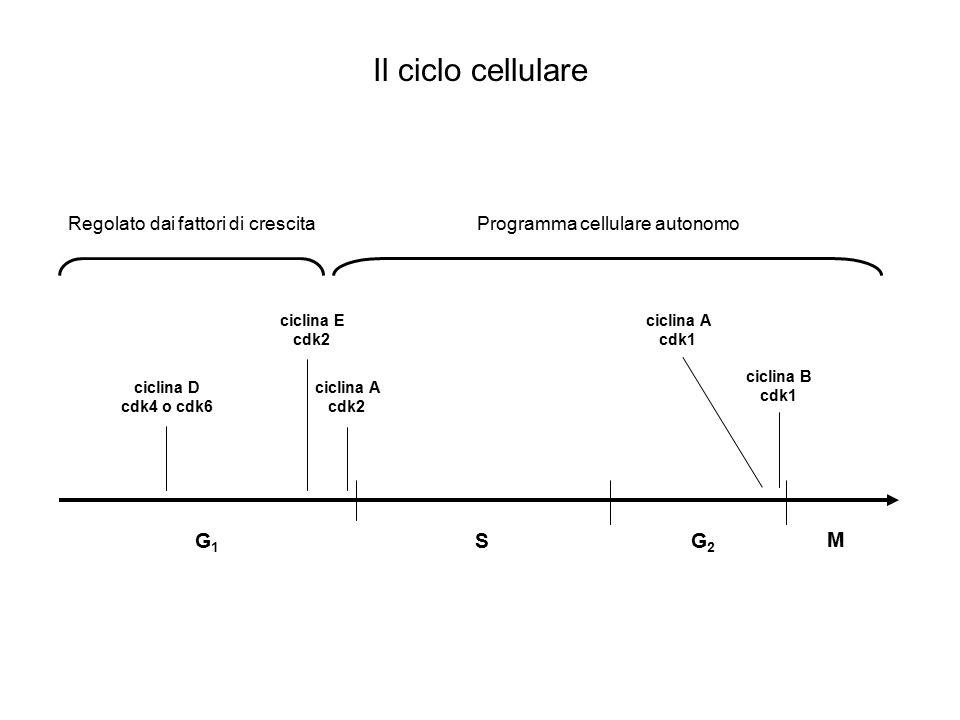 Programma cellulare autonomo
